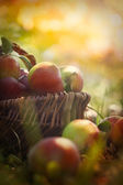 Organic apples in summer grass — Stok fotoğraf