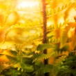 Stock Photo: Fern in forest