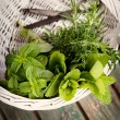 Fresh herbs — Stock Photo #26284123