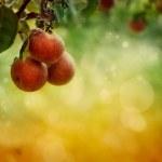Apples background — Stock Photo