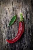 Fresh red chili pepper — Stock Photo