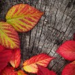 Autumn red leaves — Lizenzfreies Foto