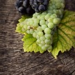 Fresh grapes — Stock Photo