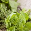 Fresh herbs — Stock Photo #39981803