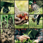 jardín collage — Foto de Stock   #43161001