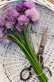 Fleur de ciboulette fraîche — Photo