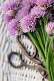 Fresh chives flower — Stock Photo