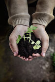 Garden seedling — Stock Photo