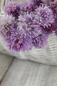 Flor de cebollino fresco — Foto de Stock