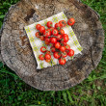 Fresh tomatoes — Stock Photo #47030823