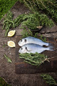 Bream fish — Stock Photo