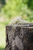 Kiełki lucerny — Zdjęcie stockowe