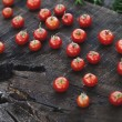 Fresh tomatoes — Stock Photo #50361439