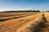 Summer rural landscape — Stock Photo