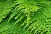 Close-up de folha verde — Foto Stock