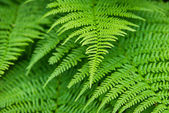 Gröna blad närbild — Stockfoto