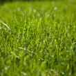 Green grass lawn — Stock Photo #13189552
