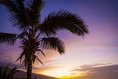 Palm Tree in a Tropical Sunset — Stock Photo