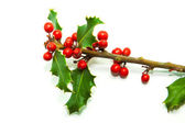 Holly Branch and Red Berries — Stock Photo