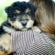 Little boy with puppy — Stock Photo