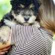 Little boy with puppy — Stock Photo #28517477
