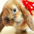 Stock Photo: Cute little easter rabbit