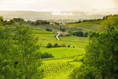 Tuscany landscape near San Gimignano, Italy — Stock Photo