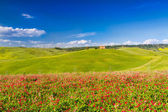 Tuscany landscape in Val d'Orcia with flowers, Pienza, Italy — Stock Photo