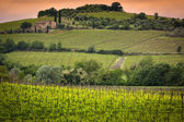 Vineyard near Montalcino, Tuscany, Italy — Stock Photo