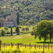 Abbey of Sant'Antimo with vineyards, Montalcino, Tuscany, Italy — Stock Photo