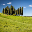 Cypress on hills, Tuscany, Italy — Stock Photo #28141399