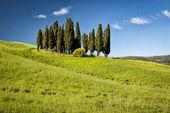 Cypress on hills, Tuscany, Italy — Stock Photo
