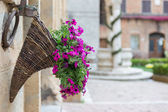 Flowers at Marketplace in Pienza, Tuscany — Stock Photo