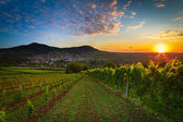 Vineyard with colorful sunrise in Pfalz, Germany — Stock Photo