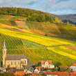 Vineyards with autumn colors, Pfalz, Germany — Stock Photo