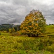 Tree at autumn in Black Forest, Germany — Stock Photo