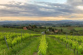 Vineyards in Tuscany at dusk, Italy — Stock Photo