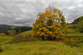 Single tree at autumn in Black Forest, Germany — Stock Photo
