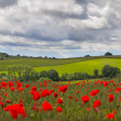 Hills in with field of poppies near Leafield, Cotswolds, UK — Stock Photo #7707598