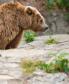 Cute bear — Stock Photo