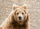 Cute bear — Stock Photo
