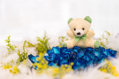 Bear and flower — Stock Photo