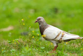 Bird and flowers — Stock Photo