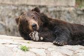 Smile bear — Stock Photo