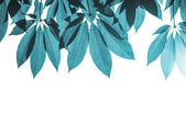 Blue leave — Stock Photo