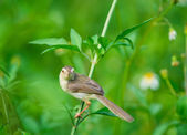 Bird in the grass — Stock Photo