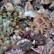 Sea ornaments - Stockfoto