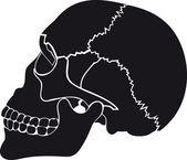 Old skull — Vettoriale Stock