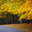 fall road with colorful trees — Stock Photo