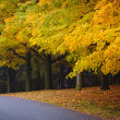 Fall road with colorful trees - Photo